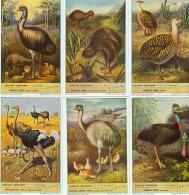 LIEBIG : S_1580 : 'Oiseaux Coureurs - Jeux De Société