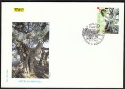 Croatia Zagreb 2001 / 1500 Years Old Olive Tree In Kastel Stafilic / FDC - Croatie