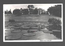 Indonesia - Kebon Raja Bogor - 1952 - Photo Card Agfa Gevaert - Indonesia