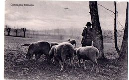 CAMPAGNA ROMANA - ED.BRUNNER - VG 1913 FP - C356 - Zonder Classificatie