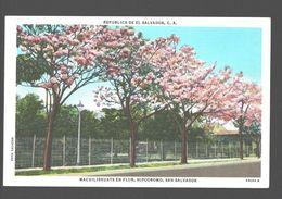 San Salvador - Macuilishuats En Flor - Hipodromo - Linen - Salvador