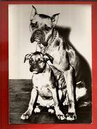 Jolie CP Animal Chien Boxer Pub Laboratoire Anacidase Scopolamine Pharmacien Reverdy La Roche Sur Yon - Dog - Chiens