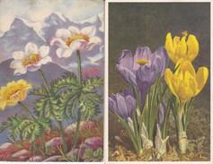 ¤¤  -   FLEURS   -  Lot De 4 Cartes D'Illustrateur  -  ¤¤ - Fleurs, Plantes & Arbres