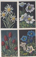 ¤¤  -   FLEURS   -  Lot De 12 Cartes D'Illustrateur  -  ¤¤ - Flores, Plantas & Arboles