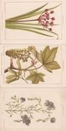 ¤¤  -   FLEURS Et PLANTES   -  Lot De 6 Cartes Chromos  -  Illustrateur  -  ¤¤ - Fleurs, Plantes & Arbres
