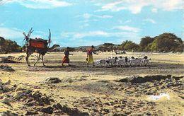 Afrique DJIBOUTI - Le Visage Du Pays Somal (ancienne Terre De Punt) CARAVANE (Editions: Syad  Djibouti 4) * PRIX FIXE. - Djibouti