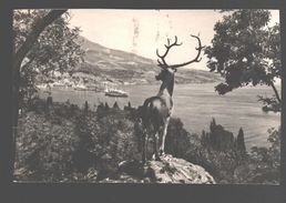 Yalta / Jalta / Crimea - Park Yuri Gagarin - Deer Statue - 1965 - Oekraïne