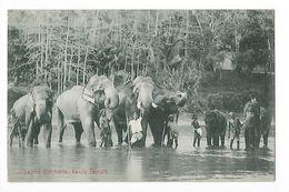 CEYLAN  - Sacred Eléphants, Kandy Temple -    - L 1 - Sri Lanka (Ceylon)