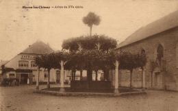 BELGIQUE - HAINAUT - MOMIGNIES -MACON-LEZ-CHIMAY - Arbre Du XVeme Siècle. - Momignies