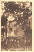 Beauraing - L'arbre Des Apparitions - Beauraing