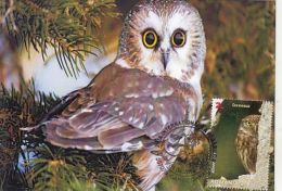 68254- LITTLE OWL, BIRDS, MAXIMUM CARD, 2014, ROMANIA - Gufi E Civette