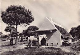 CPSM - 13 - CAMARGUE - Cabane De Boucanet - 10096GF - France