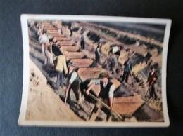 Der Staat Der Arbeit Und Des Friedens, Folge II, Bild  12, Beim Bau Einer Reichsautobahn - Kaufmanns- Und Zigarettenbilder