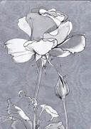 FLOR PLATEADA BRILLANTE FLEUR ARGENTE BRILLANT ILLUSTRATION. F J WARREN LTD. VOYAGEE-TBE-BLEUP - Bloemen