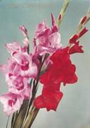 BUON COMPLEANNO. FLORES FLOWERS FLEURES. CIRCULE TORINO-TBE-BLEUP - Bloemen