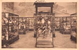TERVUREN - Museum Van Belgisch Congo - Vogelenzaal - Tervuren