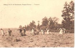 Chimay - Abbaye Notre Dame De Scourmont -  Forges-Chimay - Fenaison - Chimay