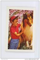 Vintage 1973 Small/ Pocket Calendar - Lassie  - Boy & Dog - Tamaño Pequeño : 1971-80