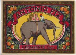 Etiquette De Caisse D'Oranges   -     29,5 X 21.50  Cm    Chromo  (thème Eléphant)  -  Début 20 ème - Fruits Et Légumes