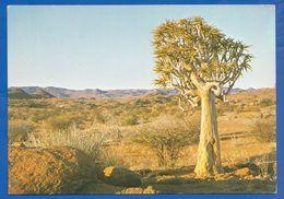 Namibia; Augrabies Falls National Park - Namibia