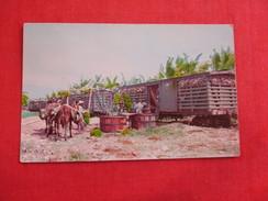Hauling Washing & Shipping  Bananas  La Ceiba  Honduras > = =ref 2778 - Honduras