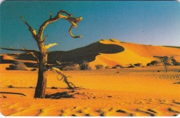 Namibia, NMB-017,  Tree In The Desert. (SIE 31) - Namibia