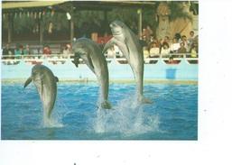 Antibes Marineland Dauphin  ( Lot De 2 Cartes ) - Antibes