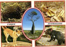 UNIQUE  AUSTRALIANS  WILDLIFE  Recto Verso - Australie