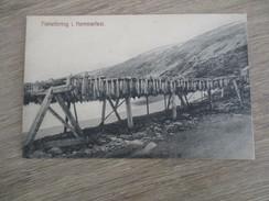 CPA NORVEGE NORGE FISKETORRING I HAMMERFEST - Norvège