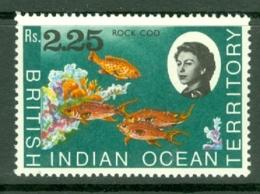 British Indian Territory (BIOT): 1968/70   QE II - Marine Life   SG27    R2.25   MNH - British Indian Ocean Territory (BIOT)
