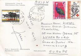 Congo 1963 Bukavu I-G Kinine Malaria Cinchona Ledgeriana Paon Du Congo Afropavo Congensis Buffalo Overprint Viewcard - Republiek Congo (1960-64)