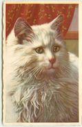 PAR ILLUSTRATEUR INCONNU PORTRAIT DE CHAT - Cats