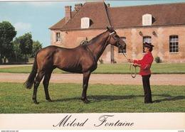 HIPPISME - HARAS - CHEVAUX - ETALONS - Milord Fontaine (Selle Français) - CPM - Chevaux