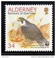 Alderney Scott #144 MNH 34p Peregrine Falcon With Eggs - Alderney