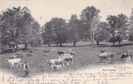 Sur L'alpage - Poststempel Bulle * 9. XII. 1901 - FR Fribourg
