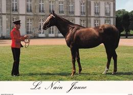 HIPPISME - HARAS - CHEVAUX - ETALONS - Le Nain Jaune (pur Sang Anglais) - CPM - Chevaux