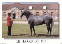 HIPPISME - HARAS - CHEVAUX - ETALONS EN PRESENTATION AU HARAS DU PIN - CPM - Chevaux