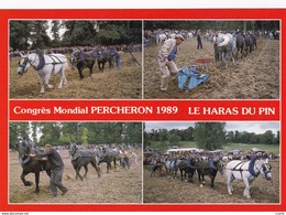 HIPPISME - HARAS - CHEVAUX - PERCHERONS - Congrès Mondial Percheron 1989 Le Haras Du Pin - Concours De Labours - CPM - Chevaux