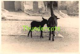 ANCIENNE PHOTO LA CORSE JUIN 1956 VINTAGE PHOTO CORSICA JUNE 1956 - Lieux