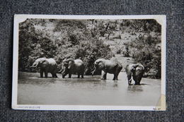KENYA - Éléphants Africains ( Bel Affranchissement) - Kenya