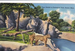 ZOOLOGICAL PARK, DETROIT - TIGERS - Tigers