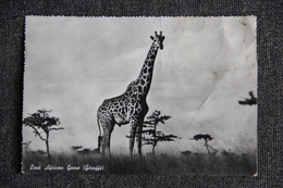 KENYA - Girafe ( Bel Affranchissement ) - Kenya