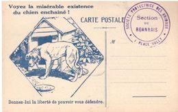 Voyez La Misérable Existence Du Chien Enchainé (SPA) - Dogs