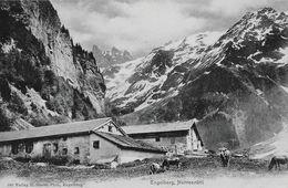 ENGELBERG → Herrenrütti Mit Viehherde Und Den Spannörter, Ca.1910 - OW Obwalden