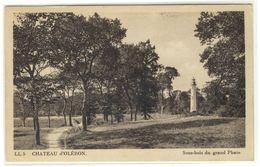 ILE D'OLERON  -  CHATEAU D'OLERON  -  Le Sous Bois Du Grand Phare   -  Ed. LL, N° 5 - Ile D'Oléron