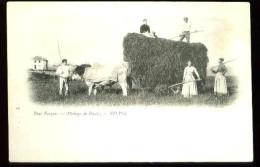 40 - Pays Basque (64) - Attelage De Boeufs - (gros Plan Animé Fenaison) - CP Précurseur, Vers 1900, Dos Non Divisé. - France