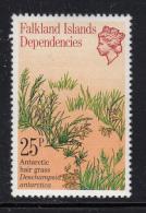 Falkland Islands Dependencies 1981 MNH Scott #1L58 25p Antarctic Hair Grass - Falkland