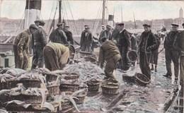 FISHING INDUSTRY - BOULOGNE SUR MER FISH QUAY - Fishing