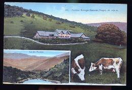 GAZON FERME ROUGE - France