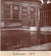 8-65Cu   Photo Belgique Antwerpen Hippopotame Bassin En 1908 - Antwerpen